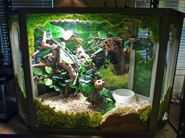 vivarium terrarium pour serpent boa python. Black Bedroom Furniture Sets. Home Design Ideas