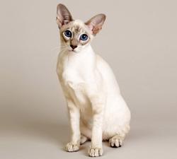 chat de singapour