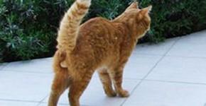 langage-corporel-chat