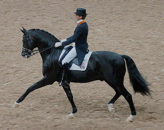 Equitation Cheval Trakehner